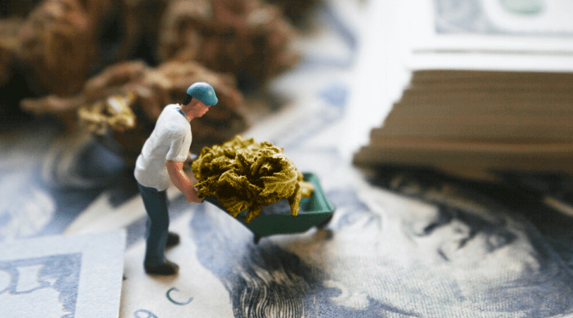 How to Start a Cannabusiness