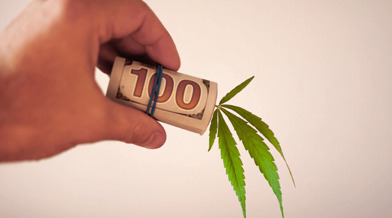 Steps To Succeed as a Cannabis Business Owner