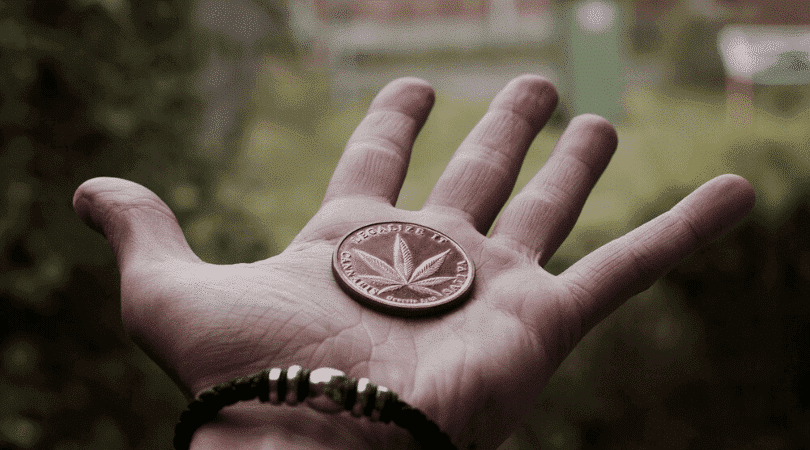 Start a Cannabis Business Advice for the Absolute Beginner