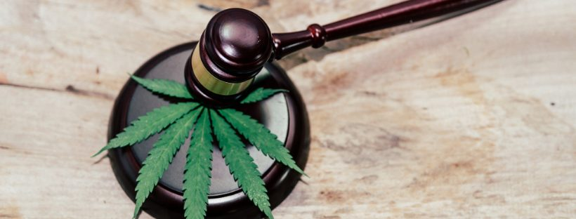 Become A Cannabis Lawyer