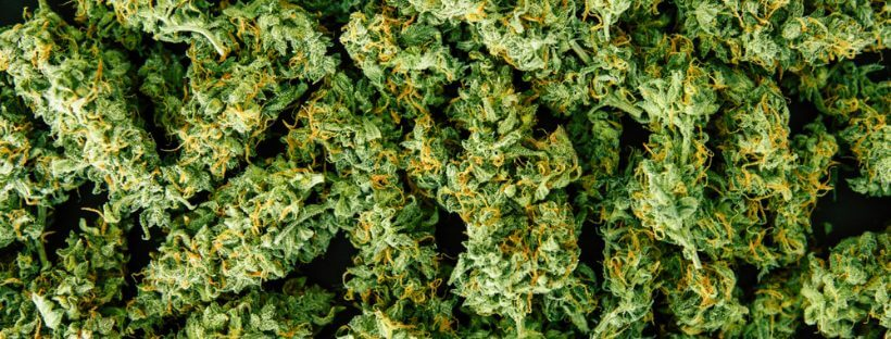 Cut Your Marijuana Buds Properly And Carefully